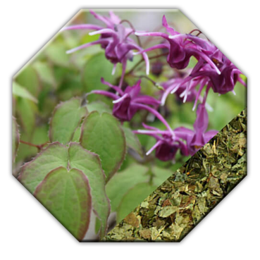 Horny Goat Weed extract for Testosterone